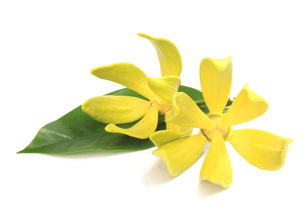 Sweet smell of Ylang-Ylang